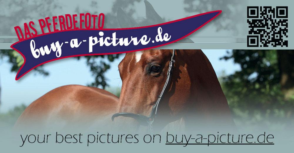 Webbanner buy-a-picture.de 1200x627px - fuer eine druckbare Version bitten wir um Kontaktaufnahme